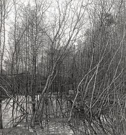 Старое гнездо сороки