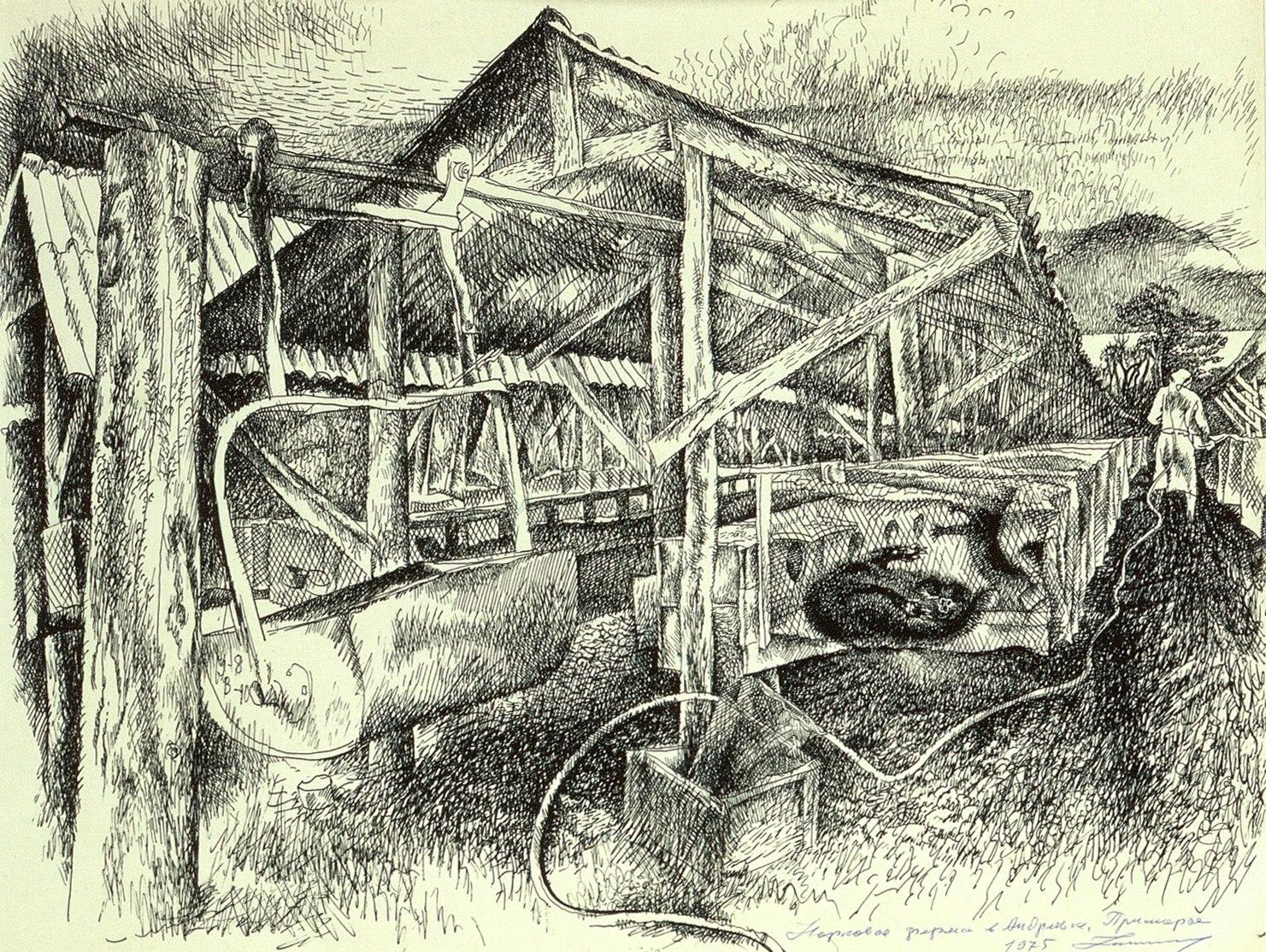 Норковая ферма в Андреевке, Приморье