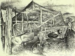 """""""Mink Farm in Andreyevka, Primorye"""""""