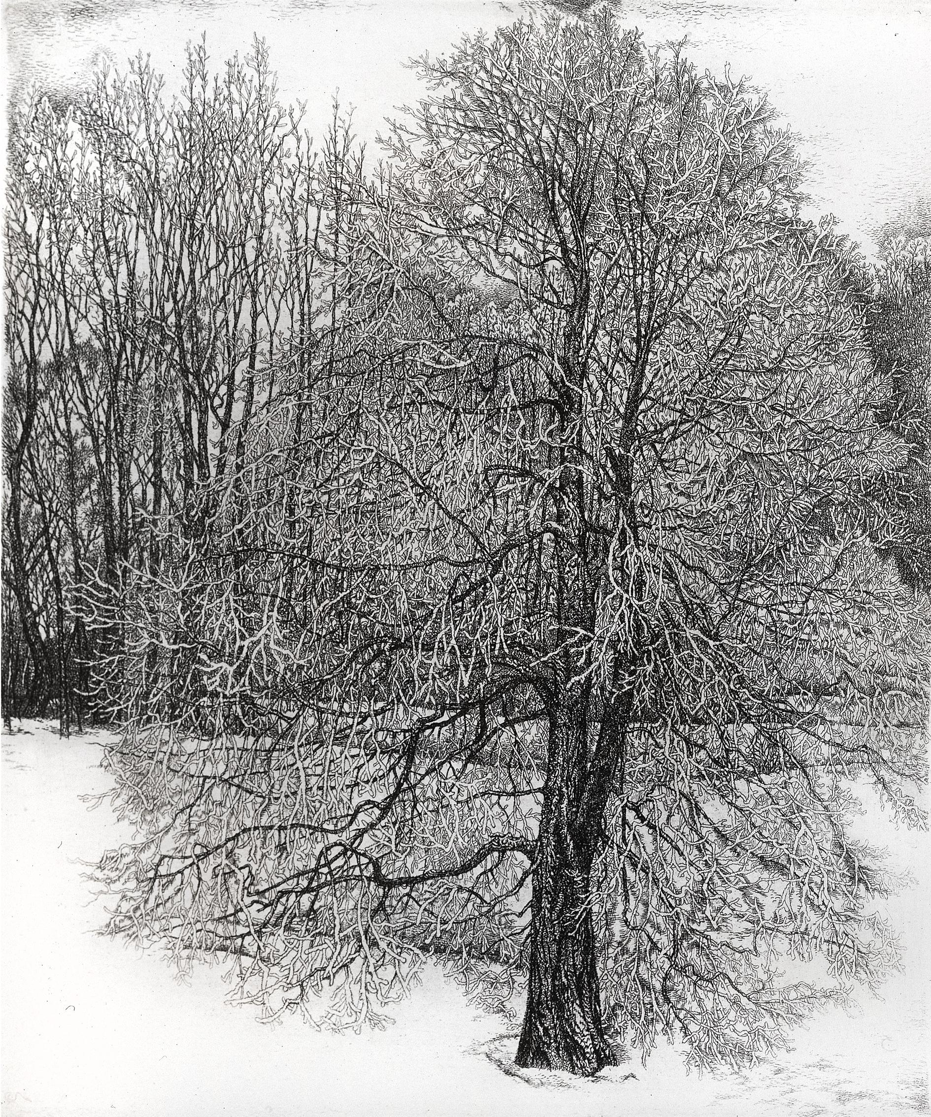 Tree in Hoarfrost