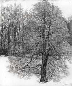 Зимнее дерево в инее