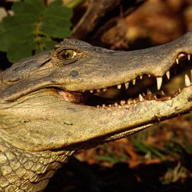 23 лунный день - Крокодил