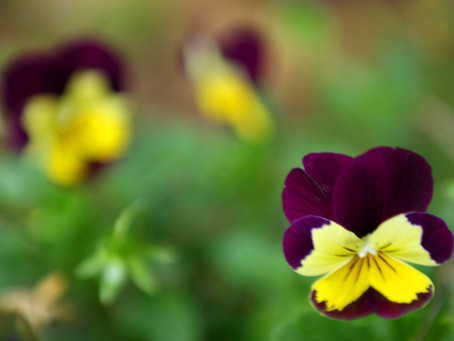 How Gently Cleanse Your Liver for the Spring Equinox