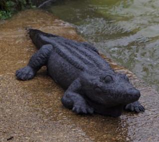 Grand crocodile