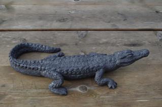Petit crocodile
