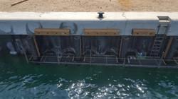Balau Marine Timber UAE