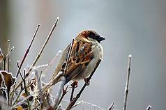 Bird trail sparrow