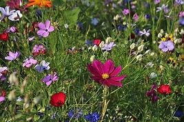 wildflowers-3571119_640.jpg