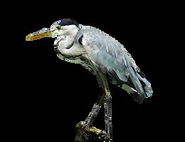 Bird trail heron