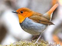 Bird trail robin