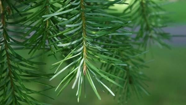 leaf6.jpg