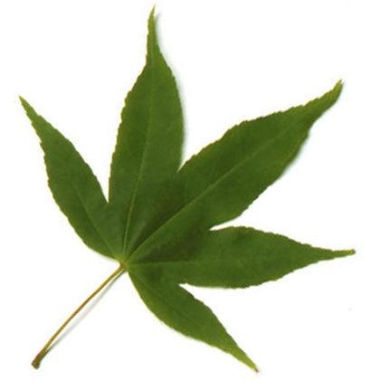 leaf 8.jpg