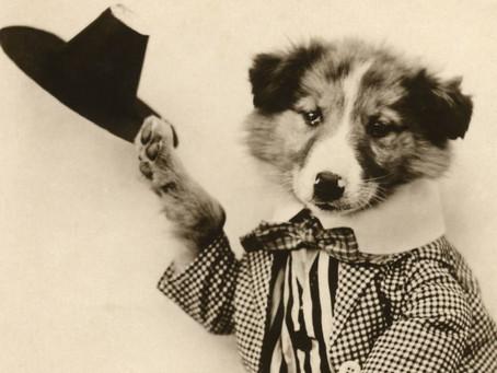 Fancy-Dressed Doggos