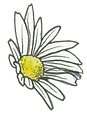 single-daisy1.png