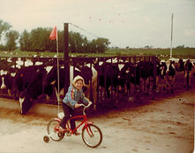 Staci tricycle w cows.jpeg
