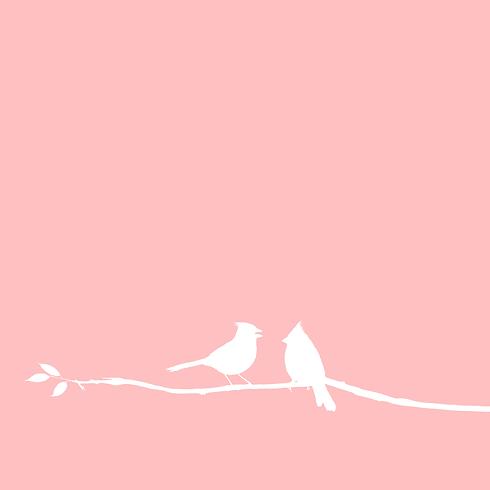 """Header BirdsMedia Agentur """"Leistungen"""""""