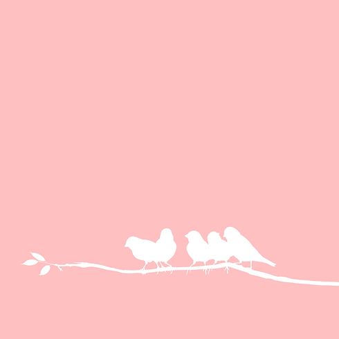 "Header BirdsMedia Agentur ""Kontaktdaten"""
