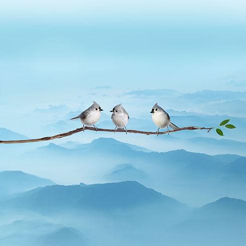 Header Startseite BirdsMedia Agentur