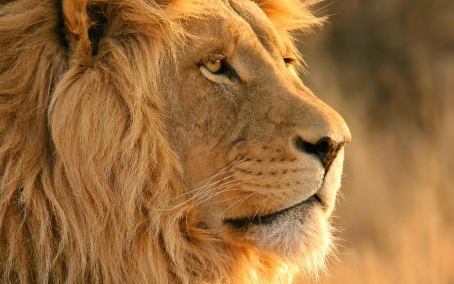 Царь-лев - Солнце