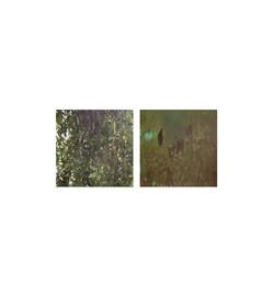 Hidden in the Undergrowth