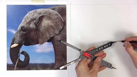 Elephant Study - Oils