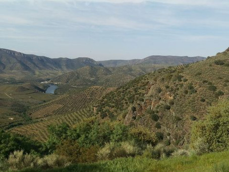 The Douro River Valley and River Cruising – Travel Tips