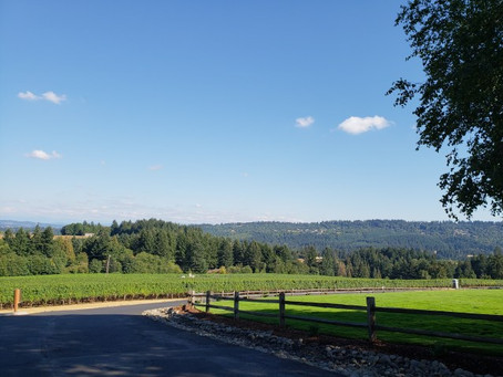 Visiting Wine Country in Oregon and Washington!  Come Sip With Me!