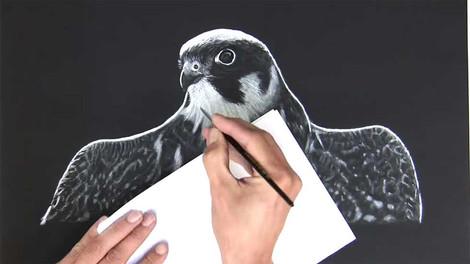 Falcon - Charcoal