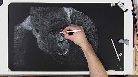 Gorilla - Colour Pencil
