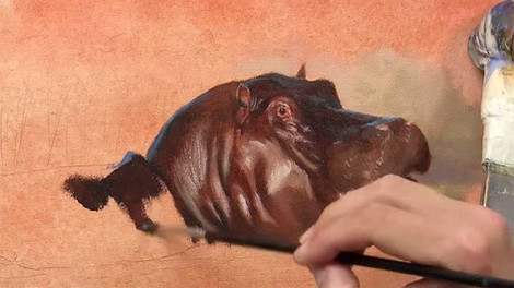 Hippo - Oils
