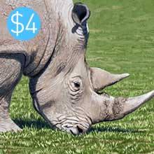 Rhino - Gouache