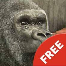 Gorilla - Charcoal