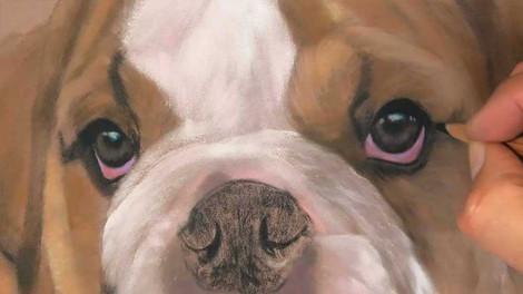 Bulldog Puppy - Pastels