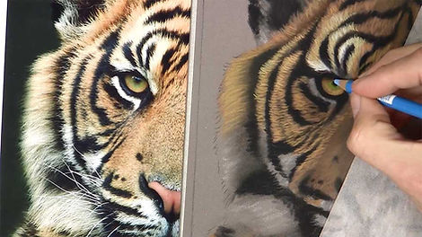 Tiger for Beginners - Pastels