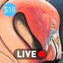 Flamingo - Live