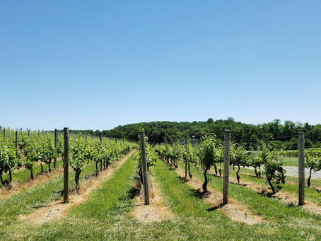 Tips2LiveBy's Things To Do – Visit A Winery Or Brewery!