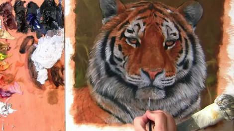 Tiger Portrait - Oils