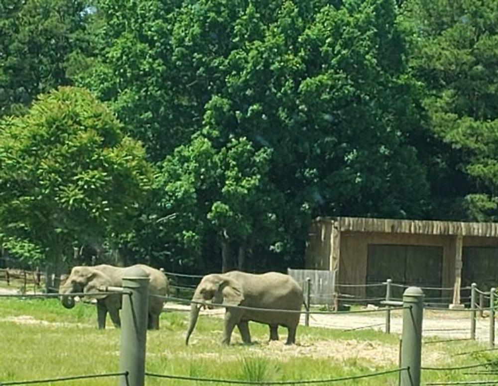 Six Flags Animal Safari