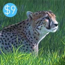 Cheetah / Grasses
