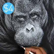 Orangutan - Colour Pencil