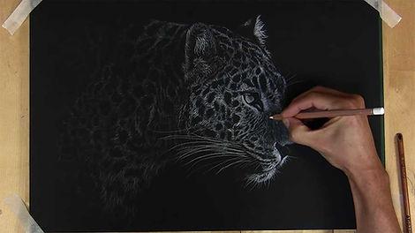 Leopard - Colour Pencil