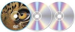 DVD-case.jpg
