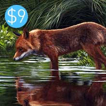 Fox / Reflection