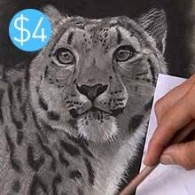 Snow Leopard - Charcoal