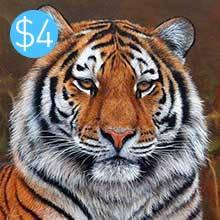 Tiger (Gift)
