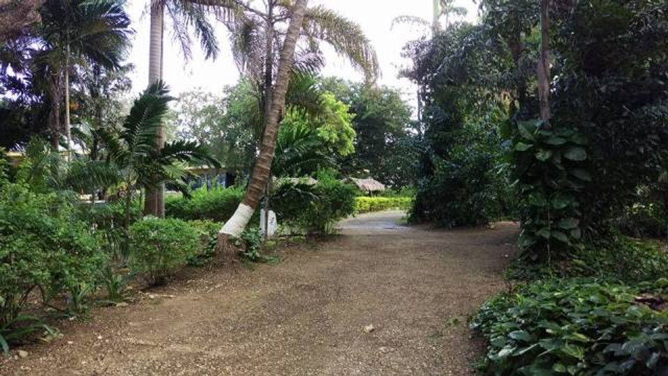 A picture of the gardens at the resort in Ocho Rios.