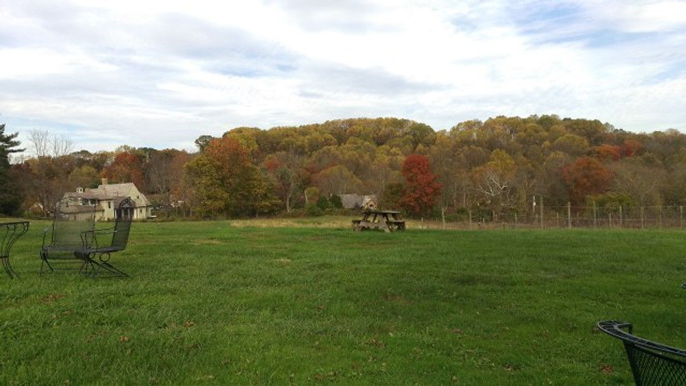 A picture of some tables and chairs outside at the vineyard. The trees with the changing leaves are in the background, as are the grape vines.