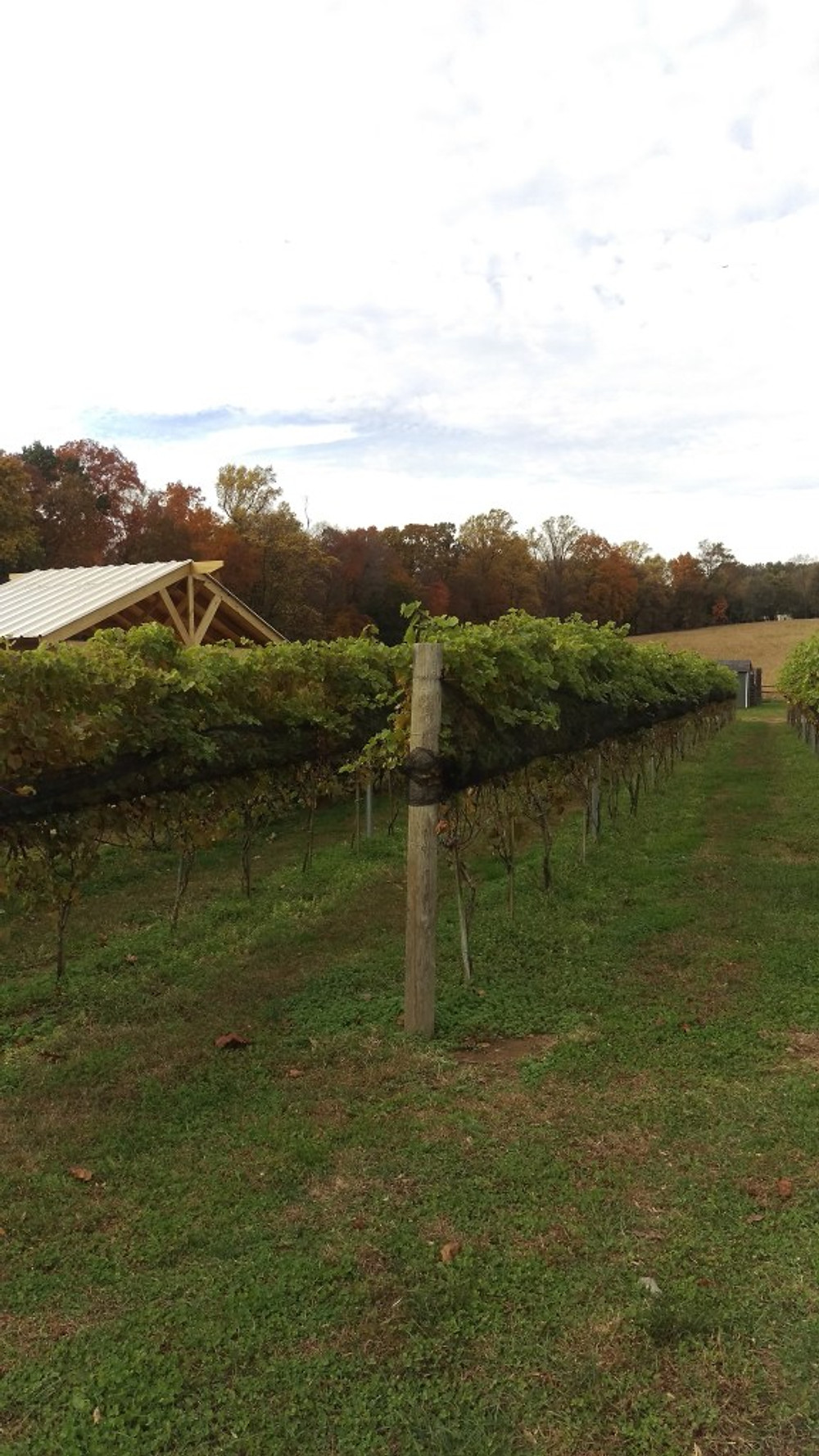 A picture of the vines at Paradocx.