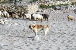 Пляж Lukovë. Наши гости