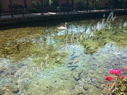 """Парк Дрилон. Рыба """"коран"""""""